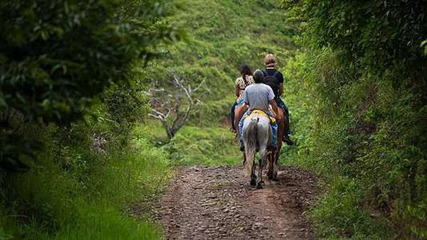 Романтическая прогулка в карете, фотосессия с лошадью, конная прогулка с инструктажем и другие услуги от КСК «Баллада» со скидкой до 70%