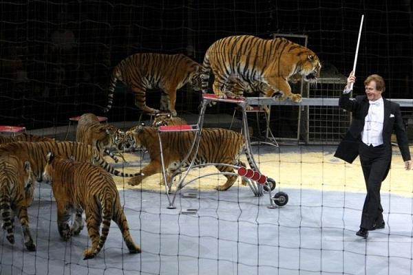 Всемирный фестиваль циркового искусства «Идол» в Большом Московском цирке на Проспекте Вернадского
