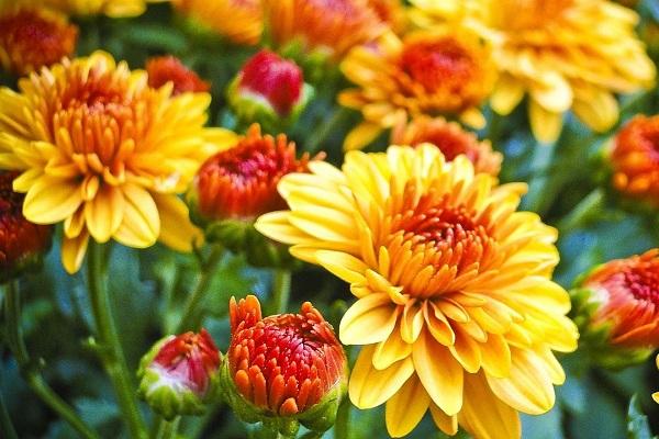 Цветы осень