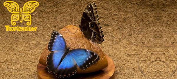Выставка живых тропических бабочек и экзотических беспозвоночных для детей и взрослых от выставочно-познавательного центра «Тропикариум»