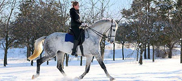 1 или 2 часа конной прогулки в поле или в лесу для одного или двоих в конноспортивном клубе «Гвардия». Инструктаж, разминка на плацу, кормление лошадей, чаепитие