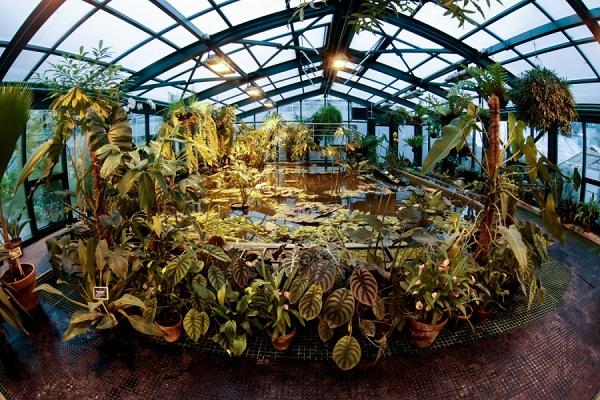 Викторная оранжерея и Виктория амазонская в «Аптекарском огороде»