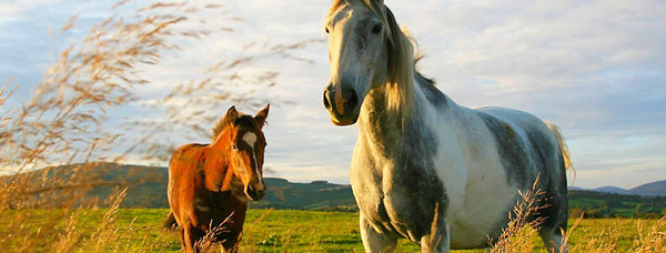 2 или 3 часа конной прогулки в лесу или в поле, предоставление лошади для фотосессии от «Конного дворика Ашукино»
