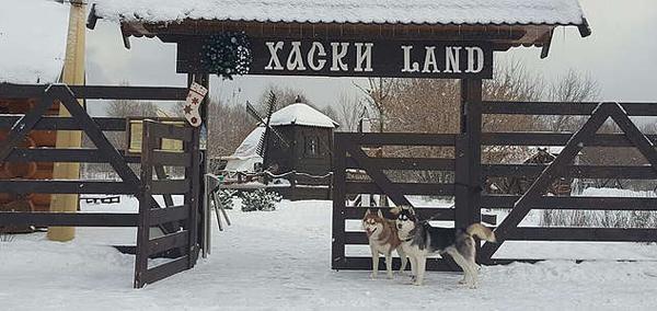 Экскурсия с катанием на хаски или без для взрослых и детей в парке «Хаски Land»