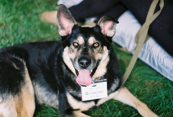 Выставка собак из приютов «#Всемпособаке» в парке «Новодевичьи пруды»