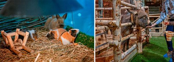 Билеты для детей и взрослых на посещение контактного зоопарка «Рога и Копыта» в будни или выходные.