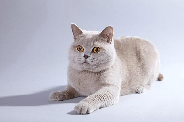 Международный Фестиваль кошек