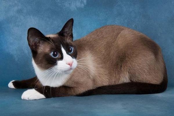 Международная выставка кошек «Бомонд кошек»