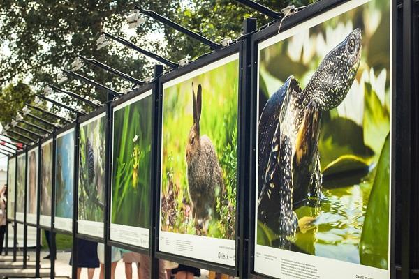 Фотовыставка под открытым небом «Лес — наш дом»