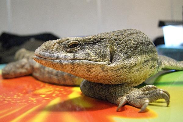 14-я Выставка экзотических животных «ТерраМания»