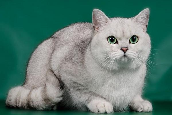 Международная выставка «Бомонд кошек – 2017»