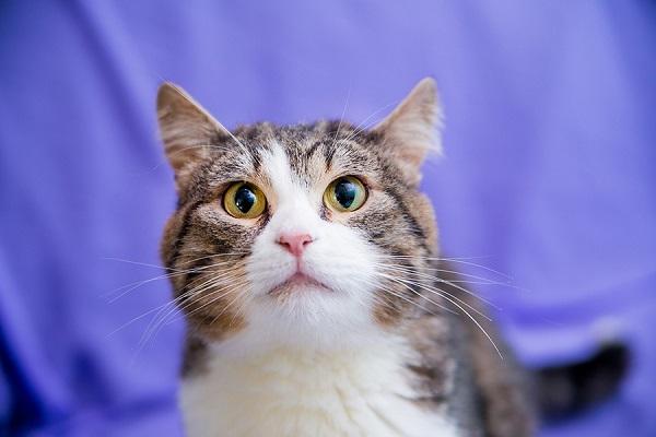 Благотворительная выставка кошек и котят из приютов «Найди друга!»