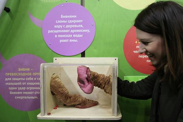 Постоянная экспозиция «Музей слонов» в Московском Зоопарке