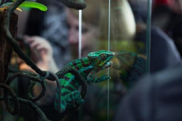 Выставка-ярмарка террариумных животных и сопутствующего товара «Рептилиум»