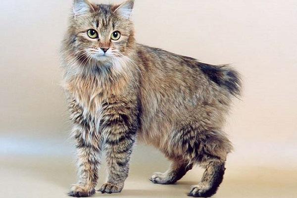 Выставка кошек памяти Людмилы Есиной «Зимняя сказка»