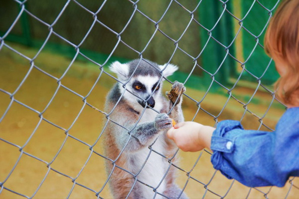 Зоопарк «Экзотик Парк»