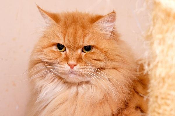 Выставка приютских кошек «Половинки»