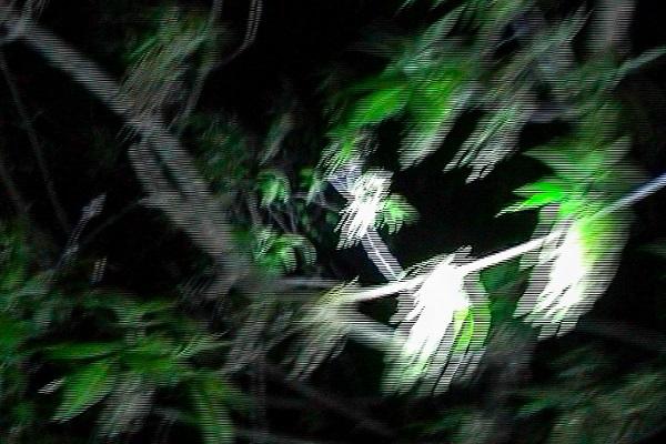 Фотовыставка «Retina»