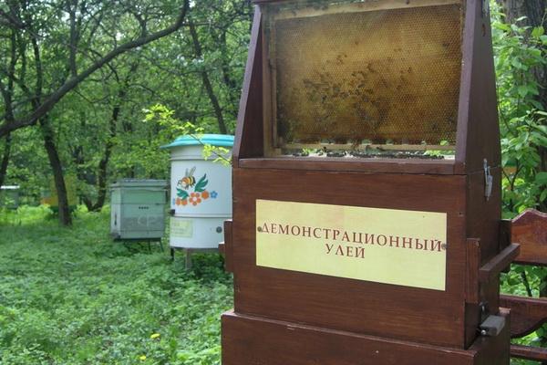 Музей меда в Кузьминках