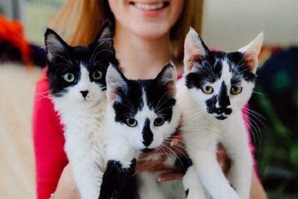 Международная выставка кошек «Грандиозная КотоЯрмарка»