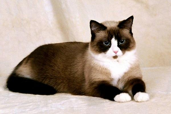 Выставка кошек «Весенняя Котомания»