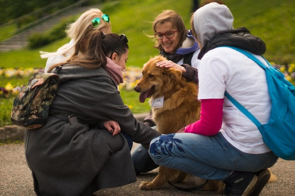 Выставка бездомных собак «Надо брать! Весной!»