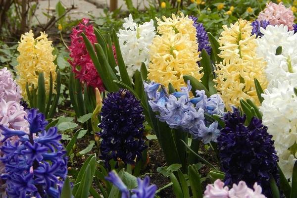 XVIII Весенний фестиваль цветов в «Аптекарском огороде»