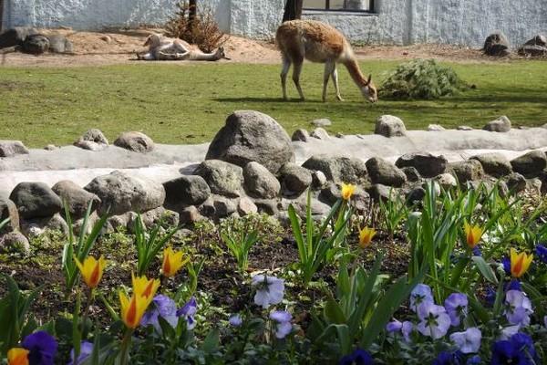Акция «Бодрое утро» в Московском зоопарке