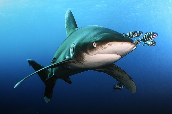 Фестиваль подводной фотографии «Дикий подводный мир – 2018»