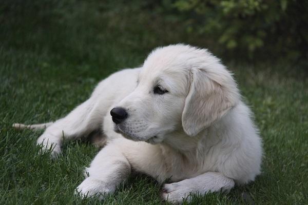 Выставка-пристройство собак «Счастье Даром»