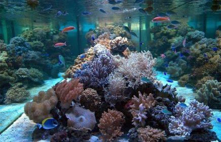 Посещение океанариума на Чистых прудах в Москве