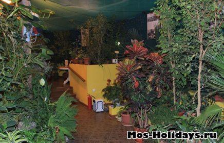 Выставка тропических бабочек на ВДНХ (закрыта)