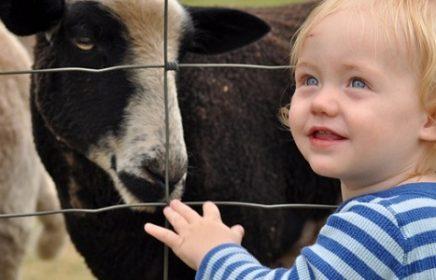 Детский контактный зоопарк «Чудесный рай» в Черемушках