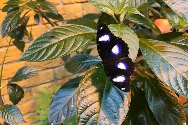 Сад живых тропических бабочек «Миндо»