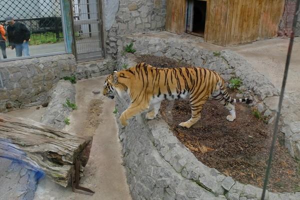 Зоопарк часы выходной билетов работы ленинградский стоимость ссср наручные продам часы