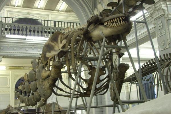 Билетов стоимость музей часы зоологический работы часах человеко расчет в стоимости