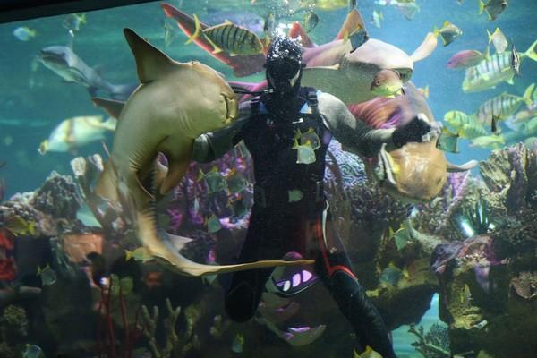 Петербургский океанариум в ТРК Нептун