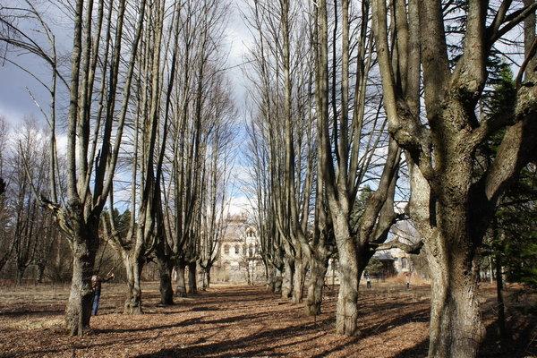 Парк во дворце Елисеева
