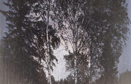 Выставка «Таинственный лес»