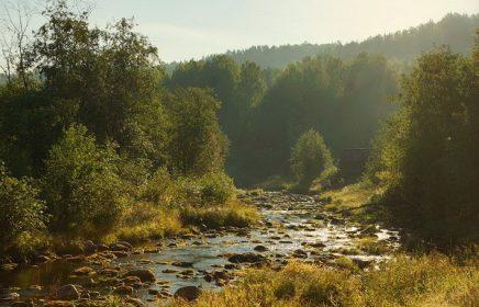 Национальный парк «Вепсский лес»