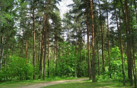 Парк «Сосновка» в Выборгском районе Петербурга