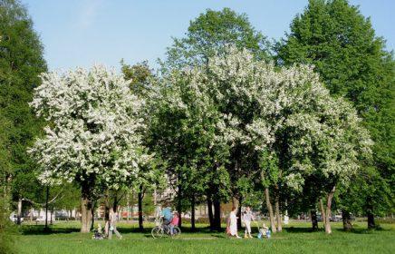 Парк «Яблоневый сад» во Фрунзенском районе Петербурга