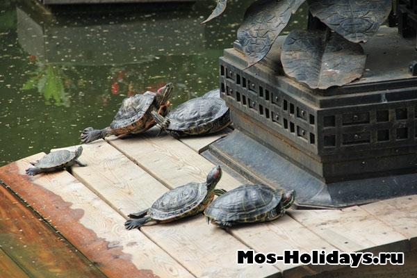 Черепахи в Ботаническом саду на Проспекте Мира