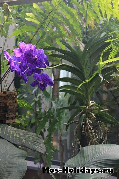 Орхидея. Аптекарский сад на Проспекте Мира