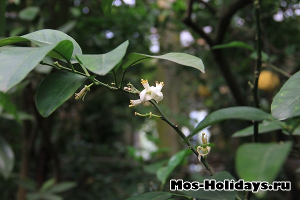 Цветок бергамота в субтропической оранжерее Аптекарского огорода на Проспекте Мира