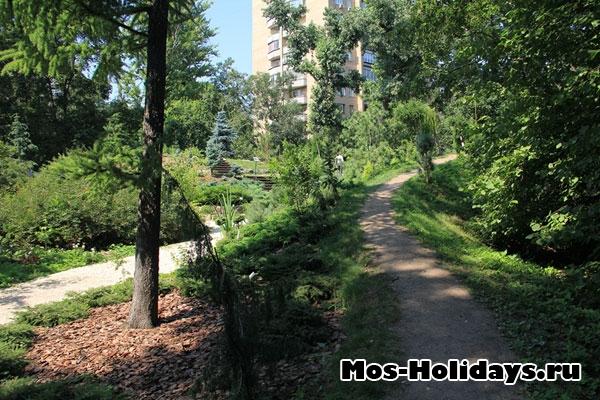 Хвойные деревья в Ботаническом саду на Проспекте Мира