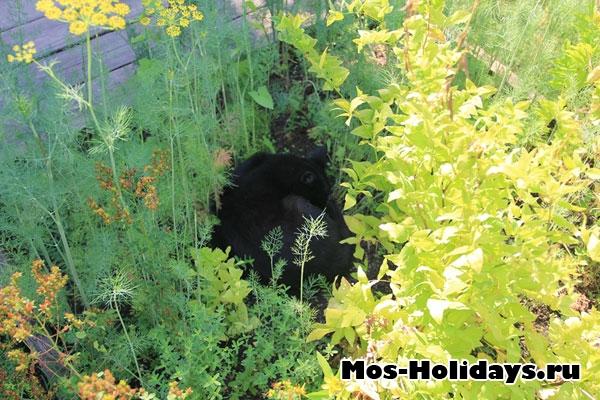 Кот спит в цветущем укропе в Аптекарском огороде на Проспекте Мира