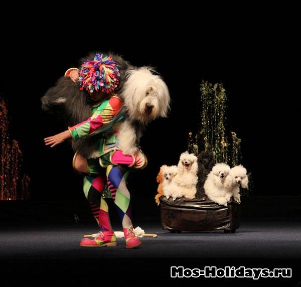 Номер с собаками, цирк Варьете