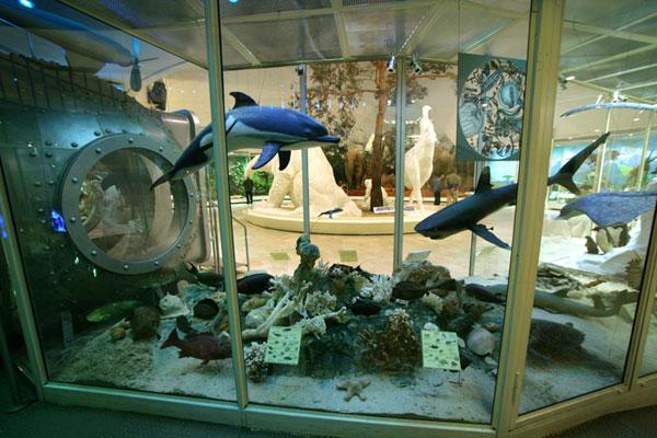 Жители океана в Дарвиновском музее