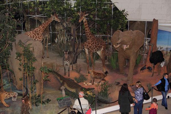 Жители саванны в Дарвиновском музее